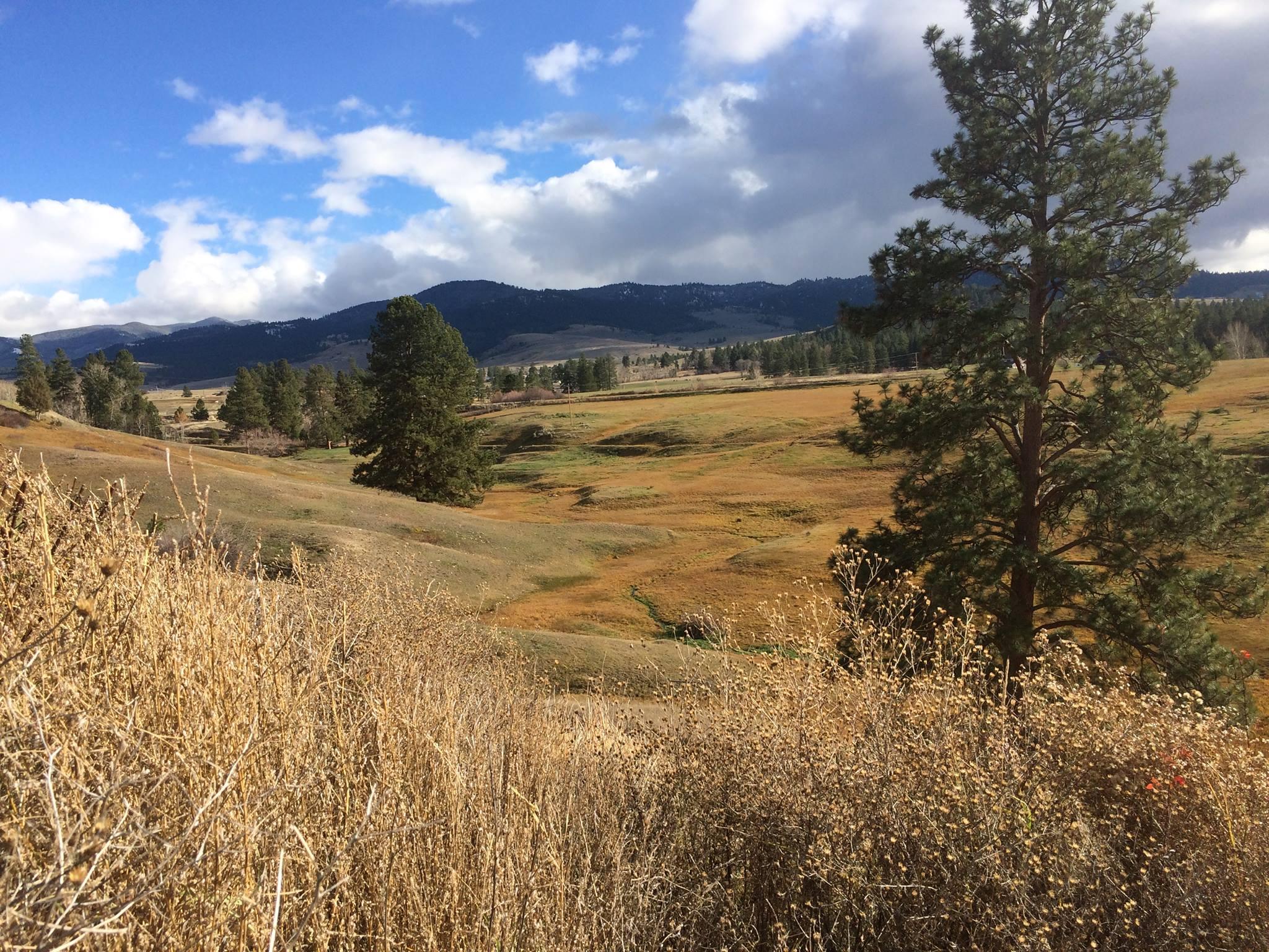 Montana Real Estate